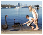 Perth half day tours. Swan River Limousine Perth day tour city by Showtime Chauffeur charter tours